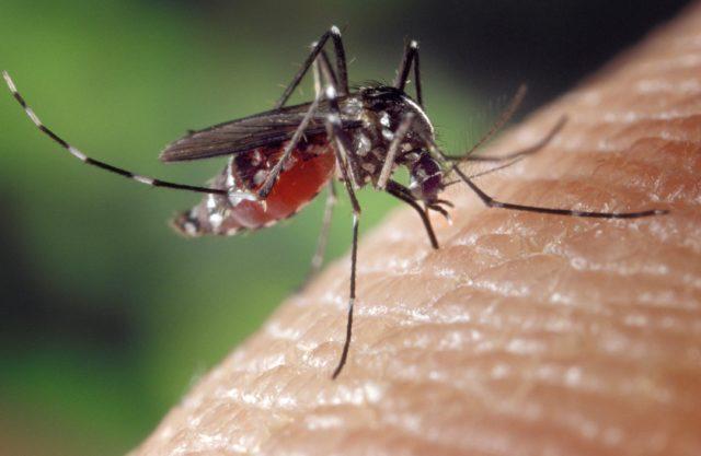 Già in vigore l'ordinanza contro la zanzara tigre