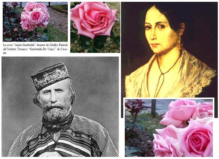 """Verrà messa a dimora anche a San Marino, la rosa """"Anita Garibaldi"""""""